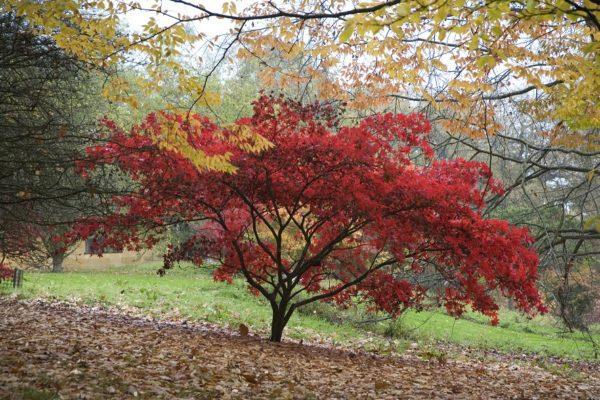 Batsford Arboretum - autumn (1)