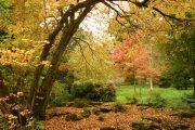 Batsford Arboretum - autumn (2)