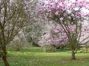 Batsford Arboretum - spring (1)