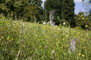 Batsford Arboretum - summer (1)