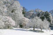 Batsford Arboretum - winter (1)