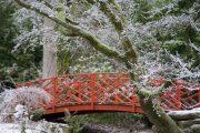 Batsford Arboretum - winter (2)