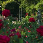 BlenheimPalace-Formal-Gardens-Rose-Gardens
