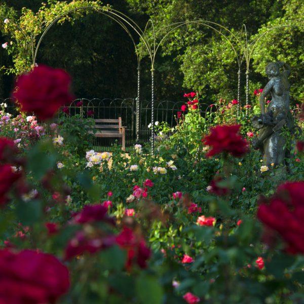 BlenheimPalace-Formal-Gardens-Rose-Gardens