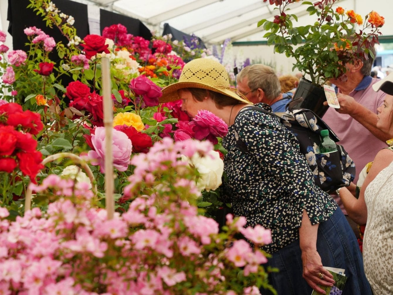 blenheim-palace-flower-show