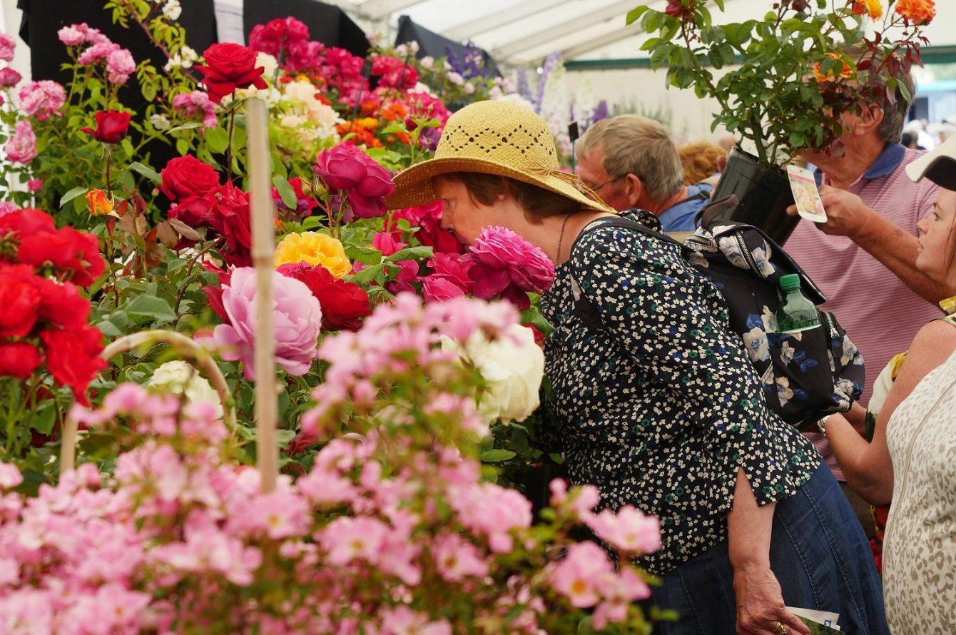 blenheim-flower-show