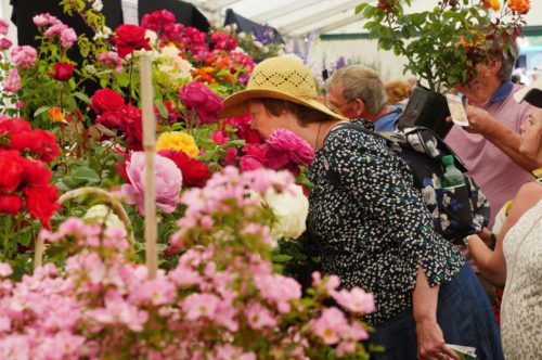 blenheim-flower-show