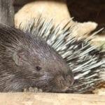 cotswold-wildlife-park