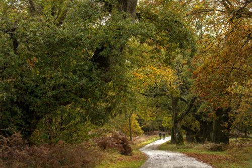 High Park Blenheim